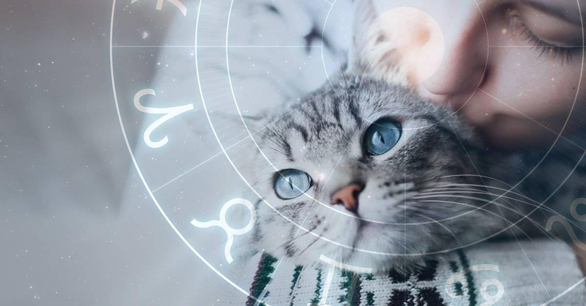 Los animales y el zodiaco: cómo es tu mascota según su signo