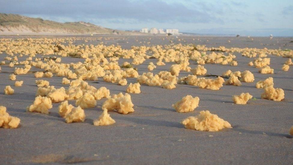 En las costas de Francia aparecieron unas raras bolas amarillas. ¿Qué son?