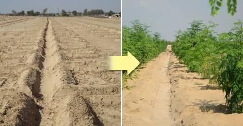 La innovadora técnica para volver fértil el desierto ¡sin ningún químico!